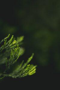 βότανα-τσάι-beliveinGreen